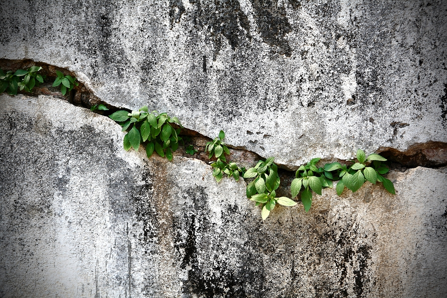 Cracked wall with plants
